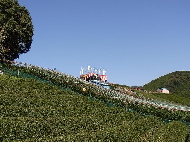 """東平さんが、お客さんに喜んでもらえるようにと茶畑の中に造った""""もてなし処茶ばら""""     ぽかぽか陽気の中、名人のお茶を茶畑の中で飲むなんて・・・贅沢すぎます!!"""