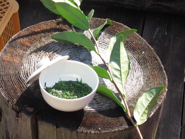 この地区独特の飲み方「つゆ茶」。一煎目は、とろっとした旨みと青のりのような香りを。  ニ煎目のあとは、鰹節とポン酢をかけて茶葉をいただきます。