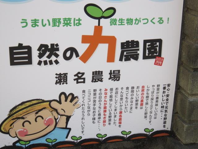 広ーい畑にある野菜たちは、すべて無農薬の有機栽培。  その時期の野菜を自分で収穫、量り売りしてもらえます。