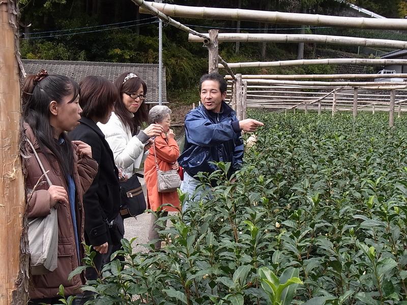 大臣賞を受賞した丹野園の丹野浩之さんを訪ね、品評会茶園を見学しました。  品評会のお茶は、朝3時から100人がかりで摘むそうです。頭がさがります。