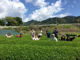静岡お茶づくし体験ツアー