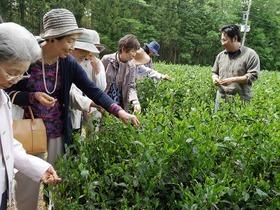 富士山麓 名水で味わうみくりやのお茶とゆったり東山散策ツアー