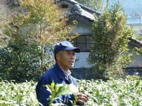 静岡トップブランド農園を訪ねる旅2 南藁科・丸高農園で品種茶&香りのお茶ざんまいツアー