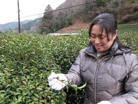 2012.03.18  山間の村に茶づくりの歴史、隠れた近代産業遺産発見!-その1-