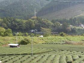 天空の茶草場と川根の茶園景観を巡る旅 Vol.1