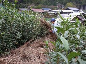 天空の茶草場と川根の茶園景観を巡る旅 Vol.2