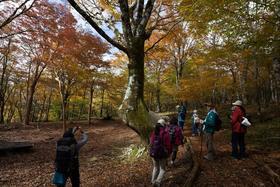 山歩きはじめの一歩 紅葉のブナの森西臼塚ハイキングvol.1