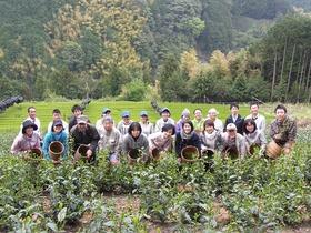 徳川家康公御用茶の里でお茶摘み手伝い(てんだい)