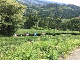 掛川東山 世界農業遺産「静岡の茶草場農法」と粟ヶ岳ハイキング