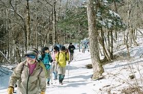 美しい冬の森へ!