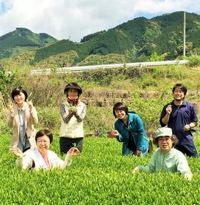 お茶摘み&茶工場見学&お茶てんぷら!静岡お茶づくし体験ツアー