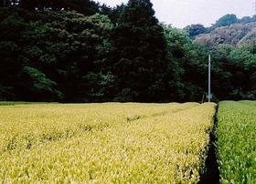 【袋井市】竹内農園