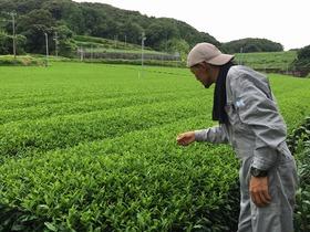 【袋井市】松井製茶・松光園