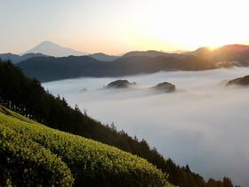 【静岡市】茶工房 豊好園