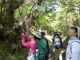 【頂上を目指さない富士山ツアー2019】春の樹海・下山トレッキング