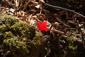 【頂上を目指さない富士山ツアー2019】秋の二ツ塚ハイキング