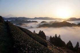 【D】清水両河内・豊好園 ~出るか雲海!?イチかバチかの早朝茶畑訪問