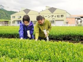 【L】静岡・クリーンティ松野でお茶づくし体験