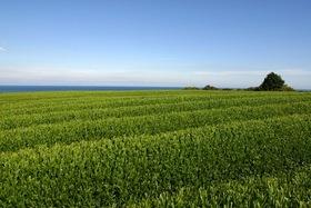 人と自然が創り出す新緑の茶畑景観!プロの写真家と訪ねる茶づくりの里