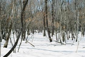 富士山腹スノーハイク ~冬の森で遊ぼう~