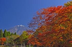 霊峰富士・信仰の源泉を訪ねて ~富士山 西麓を巡る旅 ~