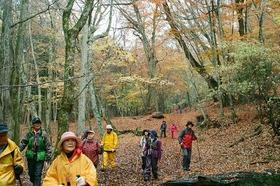 紅葉の富士山原始林を下山トレッキング ~広大な樹海の神秘に出会う~