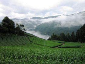天空の茶草場と川根の茶園景観を巡る旅